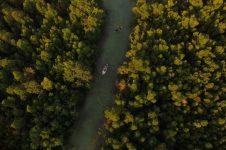 SUP THROUGH MANGROVE FOREST