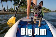 SUP DOG BIG JIM