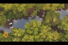 EXPLORING BY PADDLEBOARD | TRINIDAD & TOBAGO DISCOVERIES