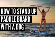 HOW TO STAND UP PADDLE BOARD WITH A DOG