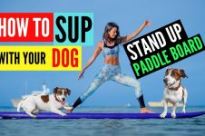 HOW TO STAND UP PADDLE BOARD WITH YOUR DOG