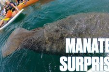 TERRIFIED TO THRILLED | ENCOUNTER WITH SEA MANATEE