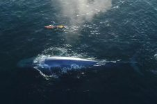 PADDLE BOARDING WITH A BLUE WHALE