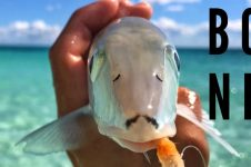 SUP CARIBBEAN FLY FISHING FOR (BONES)